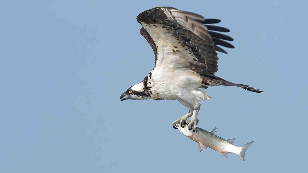 Quel est le meilleur cadre pour la photographie d'oiseaux?